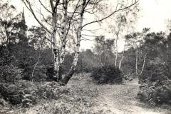 Commons_1954