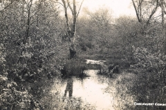 Commons_Deep_in_the_undergrowth