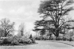 N4_0113_Farringtons_The_Drive_and_Cedar_1911