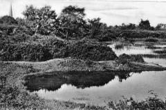N4-0192_Chislehurst_Common_Rush_Pond